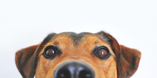 legjobb kutyatáp