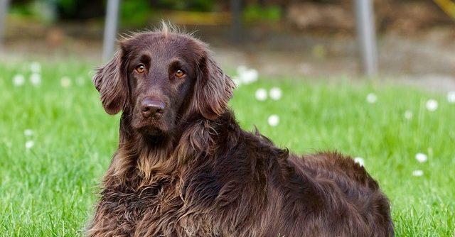 Finom és egészséges kutyatáp